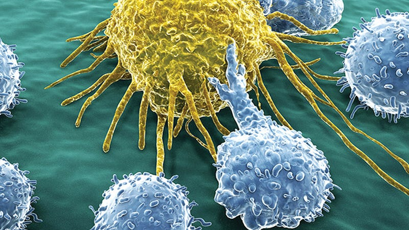 Immune cells can be trained to kill tumors. Image: imuc.com
