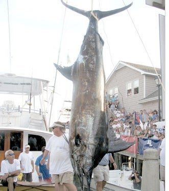 Illustration for article titled Fisherman Loses $900,000 Record Marlin Due To $5 Fishing License