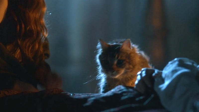 Illustration for article titled  Game of Thrones Gives Us What We Really Want: A Cat Named Ser Pounce