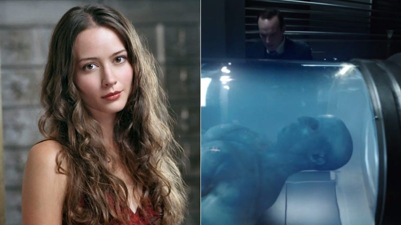 Illustration for article titled Amy Acker Joins Agents Of SHIELD And The Blue Thing's Been Identified
