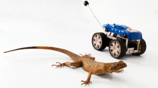 Illustration for article titled Robots need lizard tails, say scientists