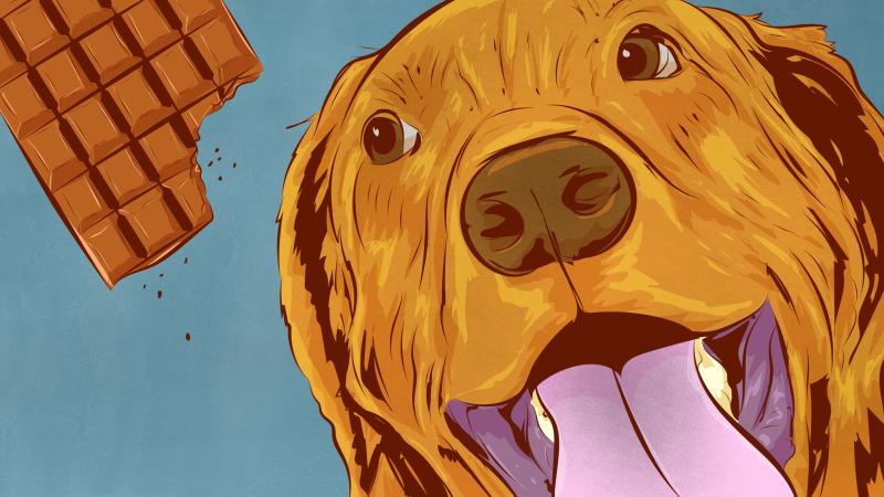 Illustration for article titled Cuáles son las comidas más peligrosas para los perros (y por qué)
