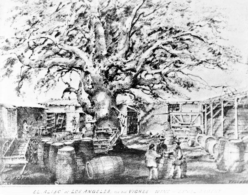 Illustration for article titled Until 1891, an Ancient Sycamore Tree Grew in L.A.'s Industrial Core