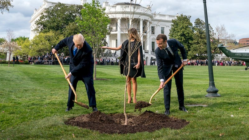 Illustration for article titled Trump and Macron's Disappearing Tree is Just in Quarantine to be Monitored For Pests