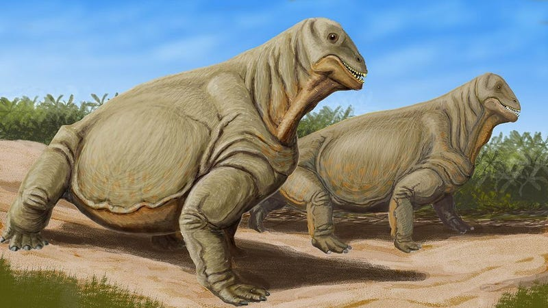 Very silly artists conception of Moschops capensis (Image: Dmitry Bogdanov/Wikipedia Commons)