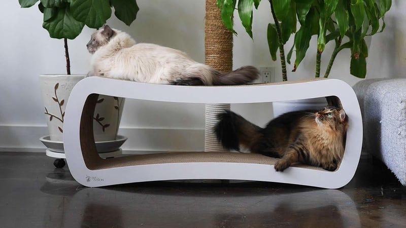 PetFusion Jumbo Cat Lounger | $50 | Amazon