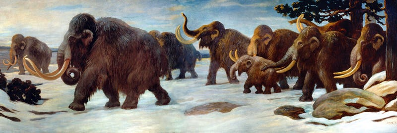 Illustration for article titled On elephants and mastodons
