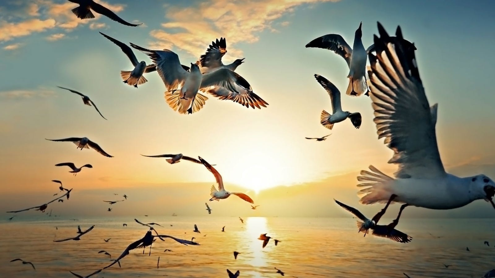 Seagulls will not blow up if they eat Alka-Seltzer