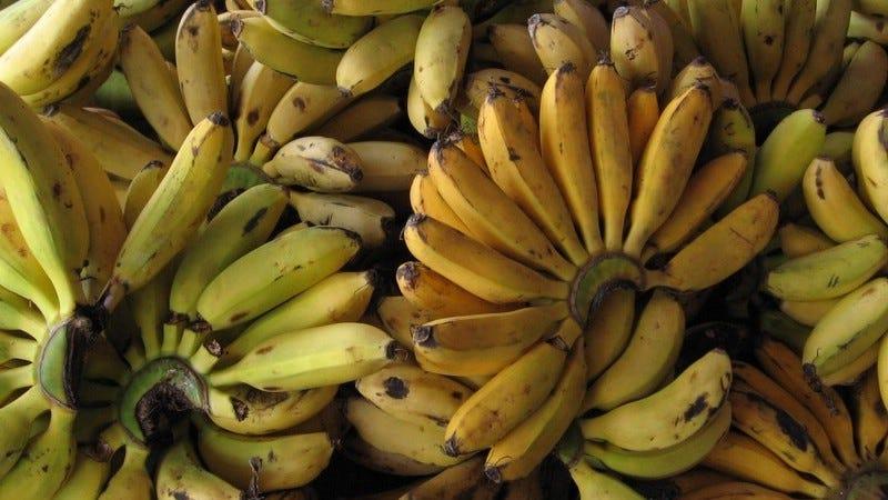 El banana podría estar en peligro.
