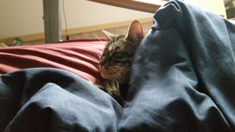 Illustration for article titled When it gets cold, my cat likes to sleep under the covers