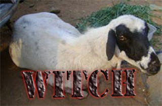Illustration for article titled Nigerian Vigilantes Turn Goat Into Police, Accuse It Of Car Theft, Shape-Shifting Witchcraft