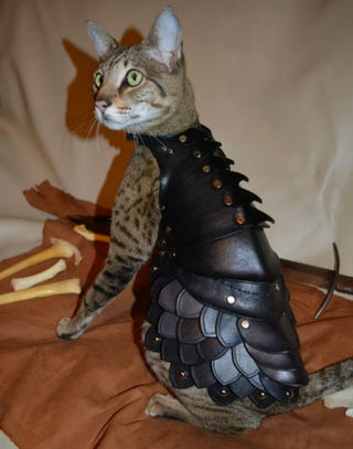 Illustration for article titled Cat Overlords Now Preparing Themselves For Proper Battle With Armor