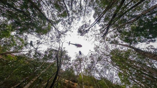 Firefighters Save Australia s Endangered  Dinosaur Trees  From Raging Bushfires