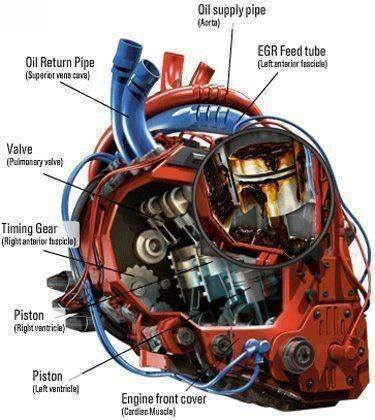 Illustration for article titled Jalop heart