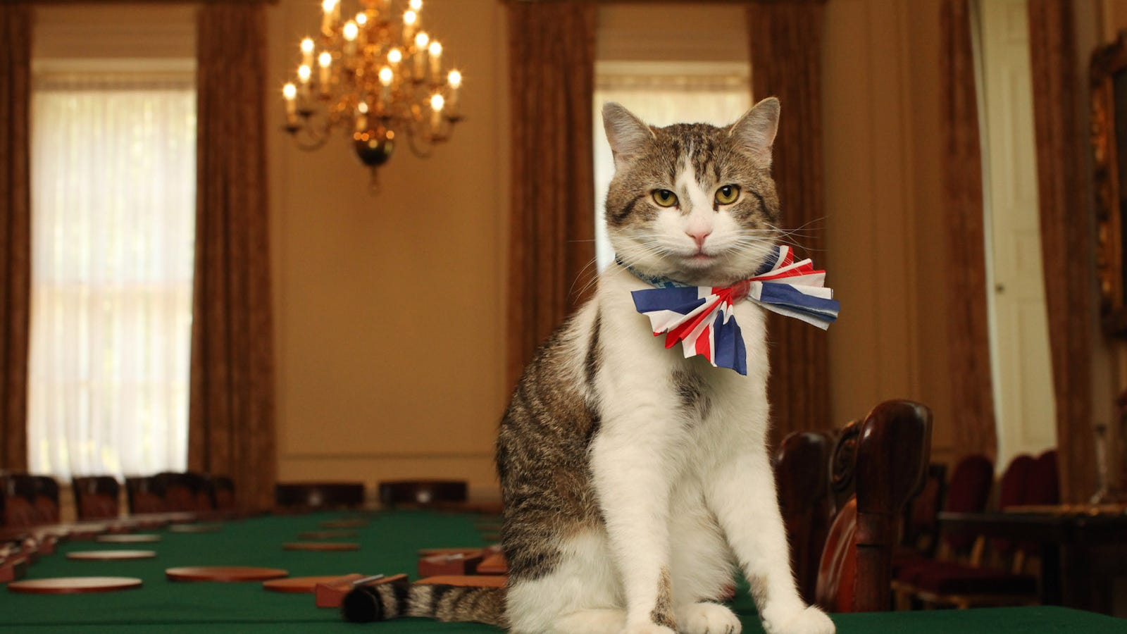 The Chateau Marmont Sent a Cease and Desist Letter to Cat Grooming ...