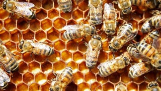 Illustration for article titled Here's How Bees Go Brave New World on Their Offspring