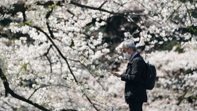 Japan Hasn t Seen Cherry Blossoms This Early in 1,200 Years