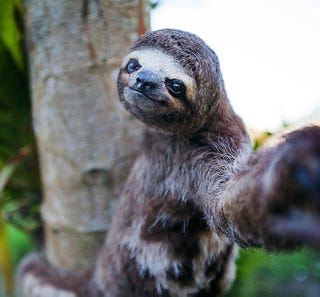Illustration for article titled If nobody owns these cool animal selfies, we should give them the money