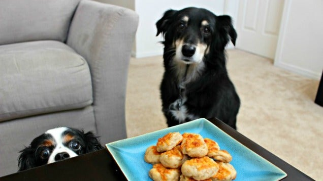 Easy Dog Treats You Can Make For Your Furry Friend
