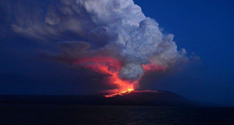 Illustration for article titled La erupción del volcán Wolf amenaza una especie única de las Galápagos