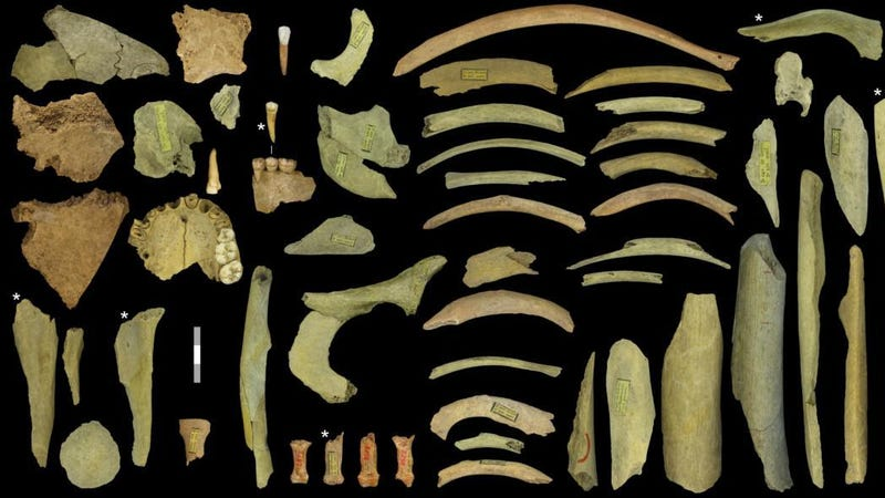 Evidence of cannibalism among Neanderthals has been uncovered before, like these bones with cut marks found in a cave in Goyet, Belgium.