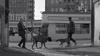 An image from a new Pedigree dog-food commercial that addresses raceYOUTUBE SCREENSHOT