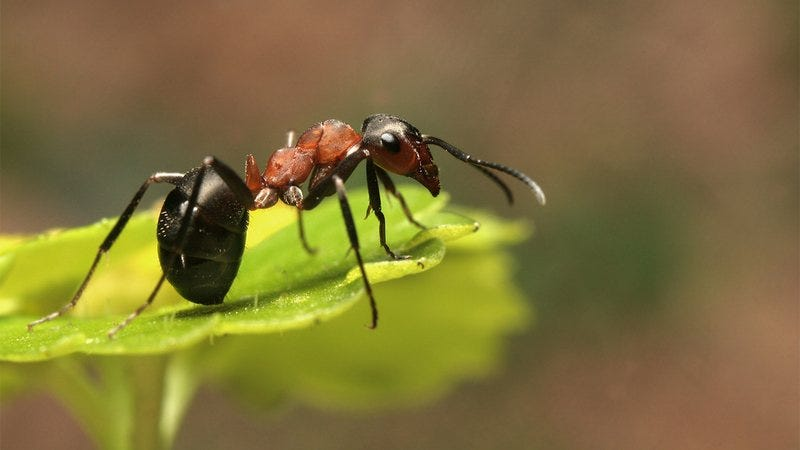 An ant on a leaf.