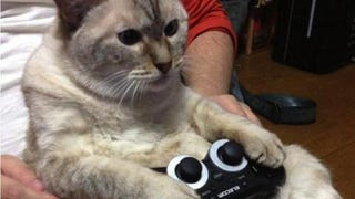 Illustration for article titled Cats Are Very Serious about Video Games