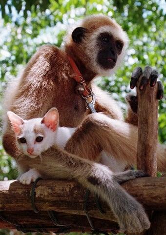 Illustration for article titled Big Cats Mimic Monkeys