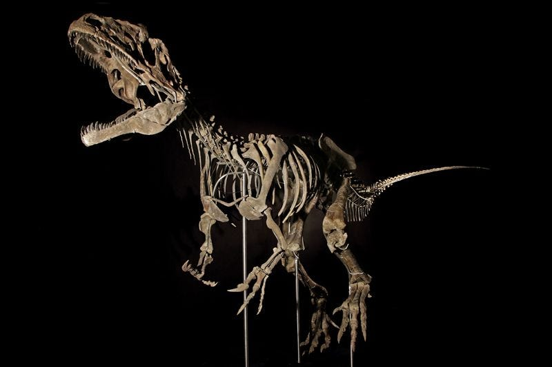 El fósil vendido en París