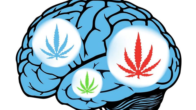 Illustration for article titled Inside Your Brain on Cannabis: Cognitive Chaos