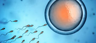 Illustration for article titled A New Way to Track Sperm Could Make IVF Easier