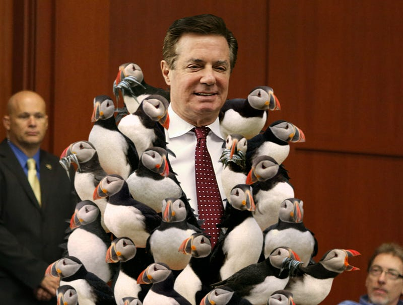 Illustration for article titled Defiant Manafort Enters Trial Wearing Coat Made Of Live Puffins