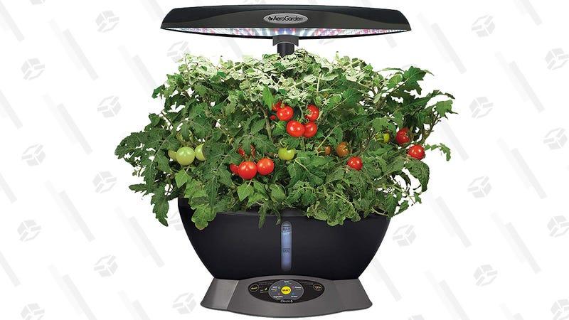 AeroGarden Classic 6 with Gourmet Herb Seed Pod Kit | $69 | Amazon