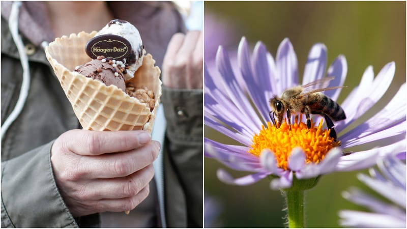 Illustration for article titled Häagen-Dazs is giving out free ice cream today to help save the bees