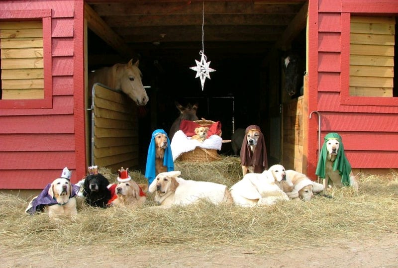 Illustration for article titled All-Dog Nativity Scene Is A Holiday Must-Have