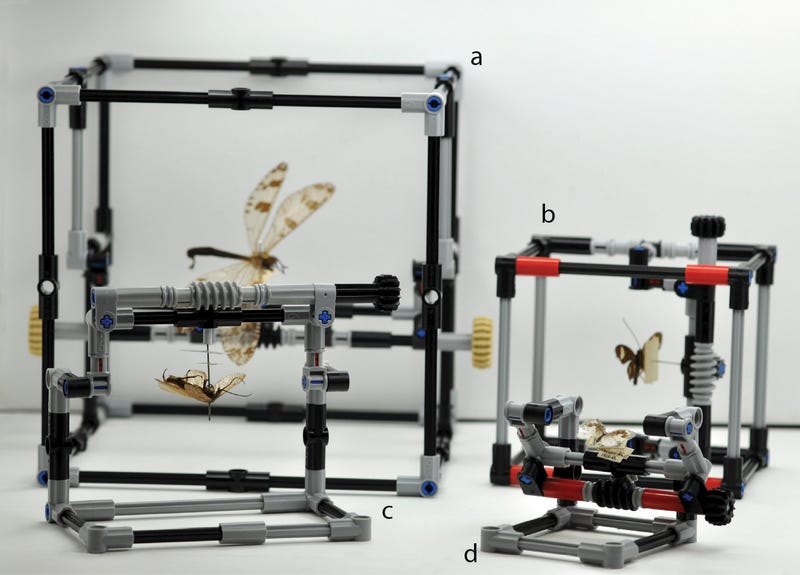 Illustration for article titled Researchers in London Are Using Lego Bricks On Its Bug Specimens