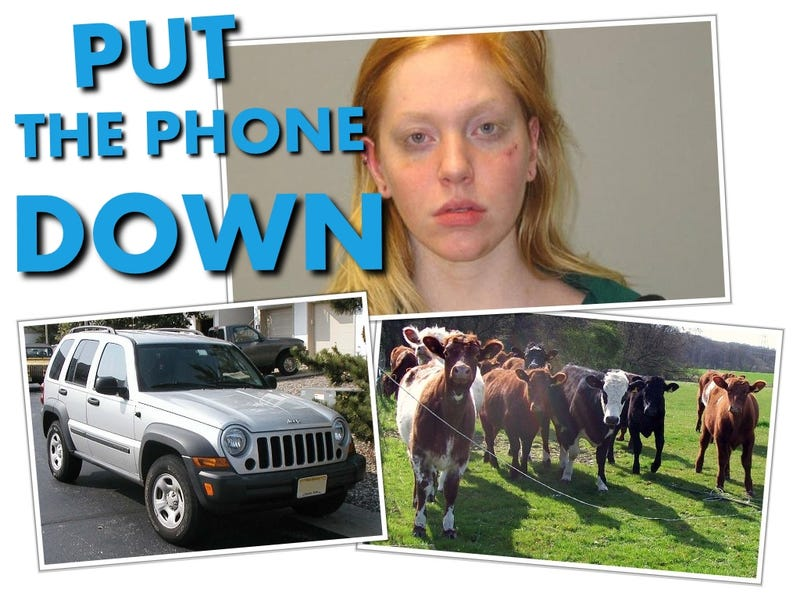 Illustration for article titled Woman Uses Cell Phone While Driving, Plows Into Cows