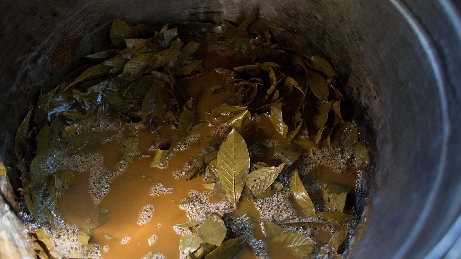 How Two Plants Combine To Form The Powerful Drug Ayahuasca