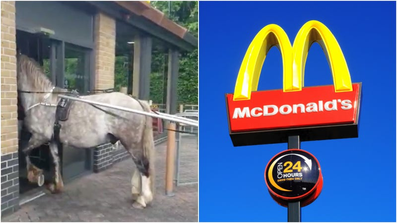 Illustration for article titled English horse and its terrible owner denied entry to McDonald's