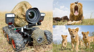 Illustration for article titled Incredible Lion Photos Taken with Camouflaged RC Camera Car, and More from TreeHugger