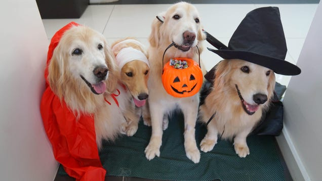 Don t Give Your Pets Halloween Candy