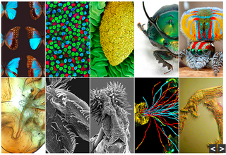 Illustration for article titled Gorgeous Microscopy Images Are Actually Pictures of Sexual Biology