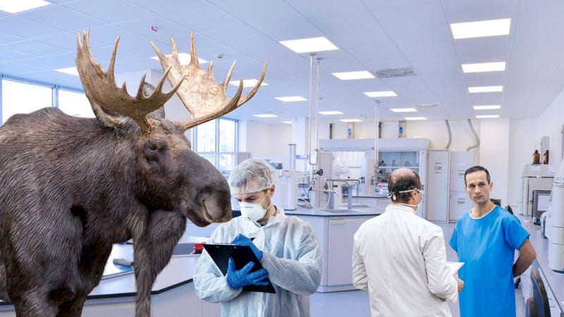 Incredible Breakthrough: Researchers At The Mayo Clinic Have Successfully Switched A Man With A Moose