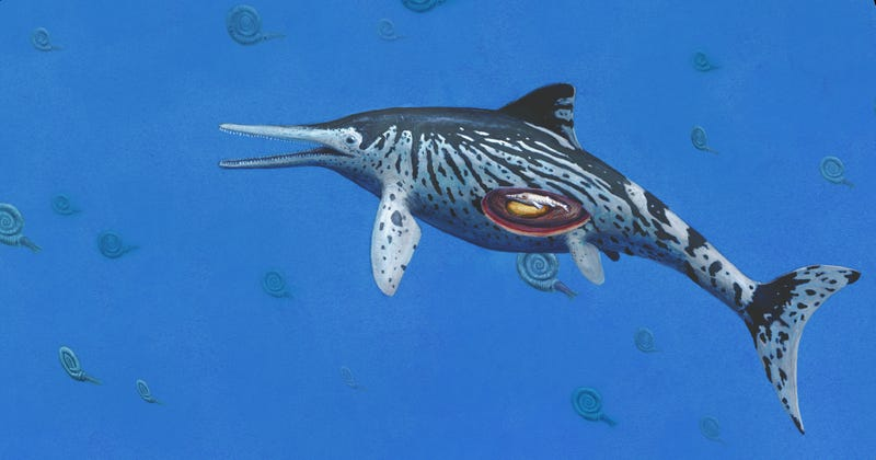 Largest Ichthyosaurus was pregnant mother say Palaeontologists