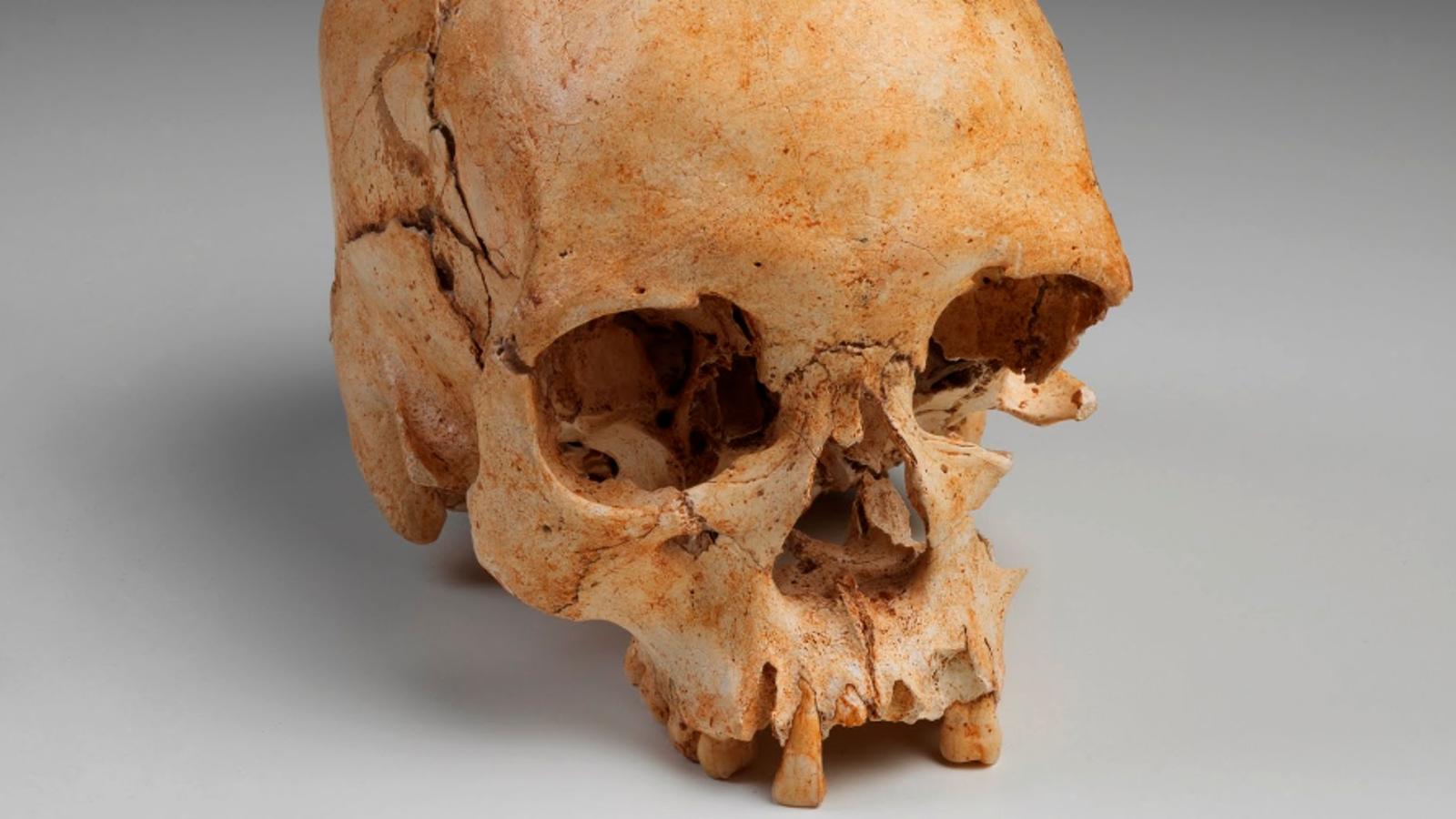 La colección de artefactos perdidos en el incendio del Museo Nacional de Brasil resucita en Internet