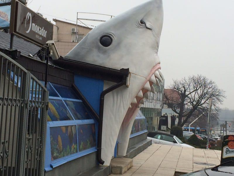 Illustration for article titled Egy rohadt nagy cápa gyomrában ebédeltünk