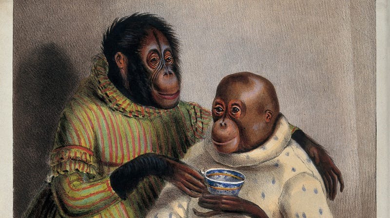 Illustration for article titled Let's Not Be Too Quick to Judge the Orangutans Embroiled in This Paternity Scandal