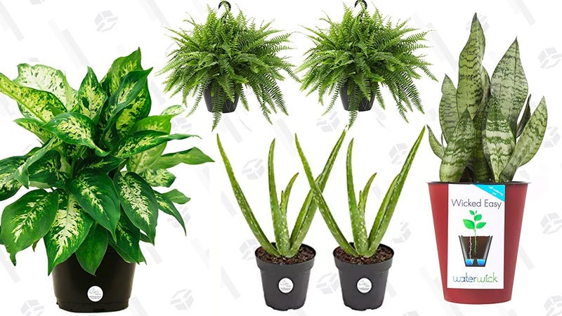 Plant Sale | Amazon | Prime members only