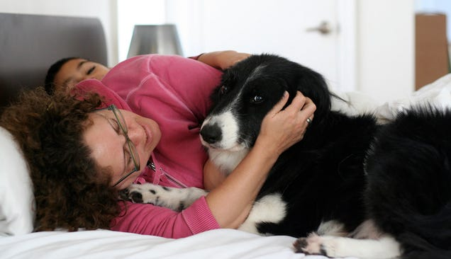 Your Dog Might Not Want a Hug, Heres How to Tell